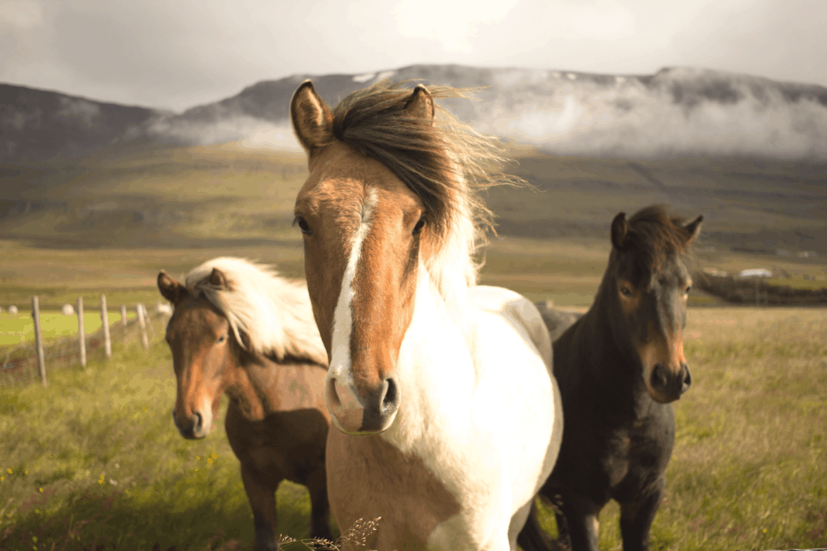 How Do Horses Get Their Color? Horse Color Genetics