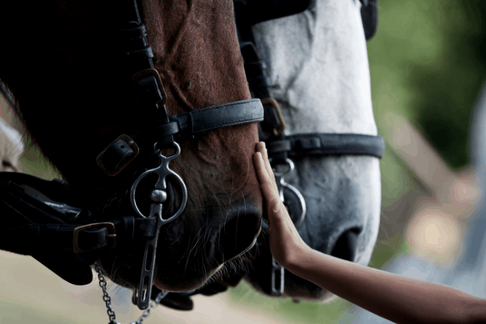 Cost to lease a horse- What are your options