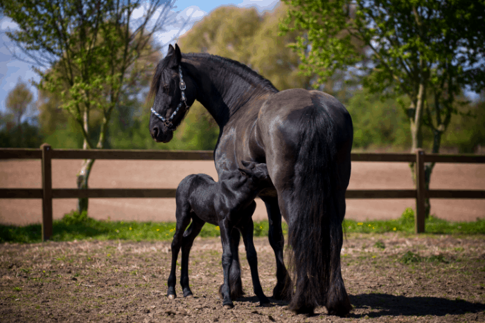 Names for Black Horses: Mare Names