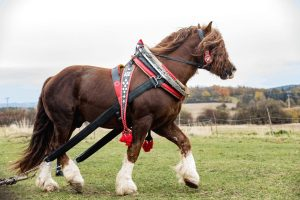 Top 7 Tallest Horse Breeds - All You Need to Know - Best Horse Rider