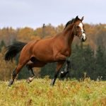 How Much Does a Horse Cost? Average Cost of Owning One.
