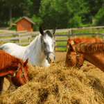Cost to Feed a Horse: A Complete Guide to Feeding Your Horse