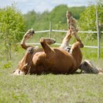 What Causes a Colic In Horses? Best Colic Treatments