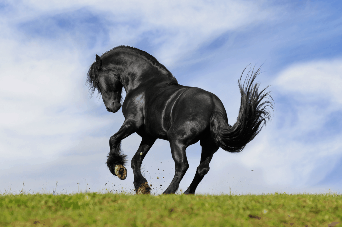unique names for black horses