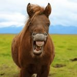 How Much Does Horse Teeth Floating Cost? Learn To Care for Your Horse's Teeth