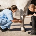 What is Proud Flesh in Horses and How to Prevent It?