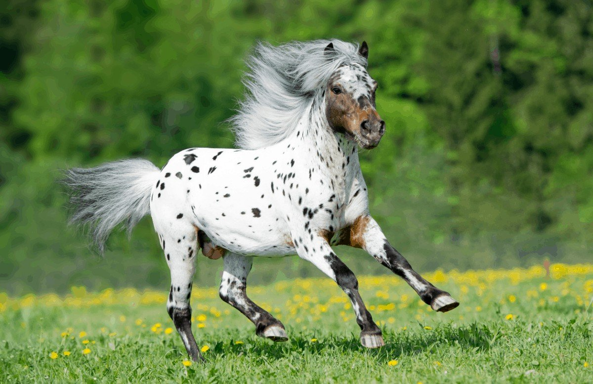 Appaloosa Horse Temperament. Top Experts' Advices