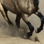 What is Ringbone in Horses? Signs and Symptoms