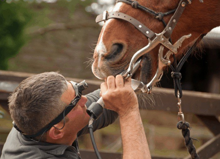 Does Floating A Horse's Teeth Hurt?