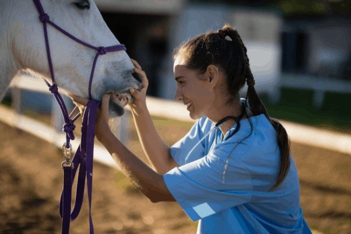 How to Care for Your Horse's Teeth