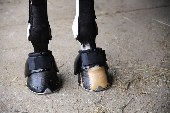 What is Horse Boots for Trail Riding?