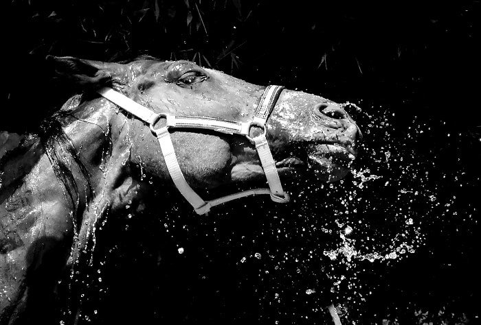 Environmental Factors About Horse Coughing