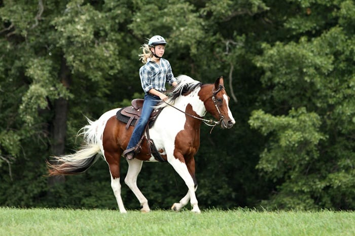 Why Do You Need to Consider Riding The Calmest Horse Breeds If You Are a Beginner?