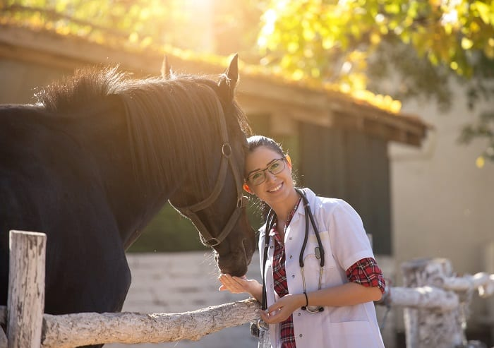 Veterinarian and Shoeing Treatment Options