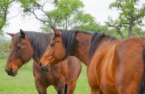 Horse Body Language Chart