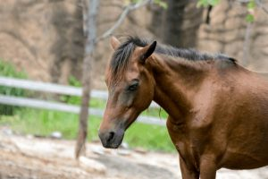 Most Common Symptoms of Lyme Disease in Horses