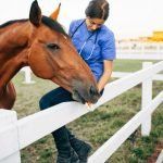 Natural Treatment for Ringbone in Horses