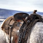The Best Saddle for Trail Riding
