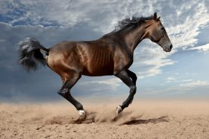 What Does The Horse Noises Names Mean?