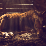 What Is Cushing's In Horses: Signs, Causes & Treatment