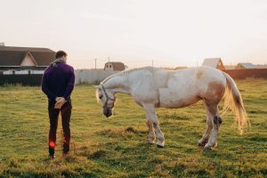 When is a Horse Too Old to Ride