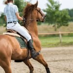 Which is the Calmest Horse Breed for Beginners?
