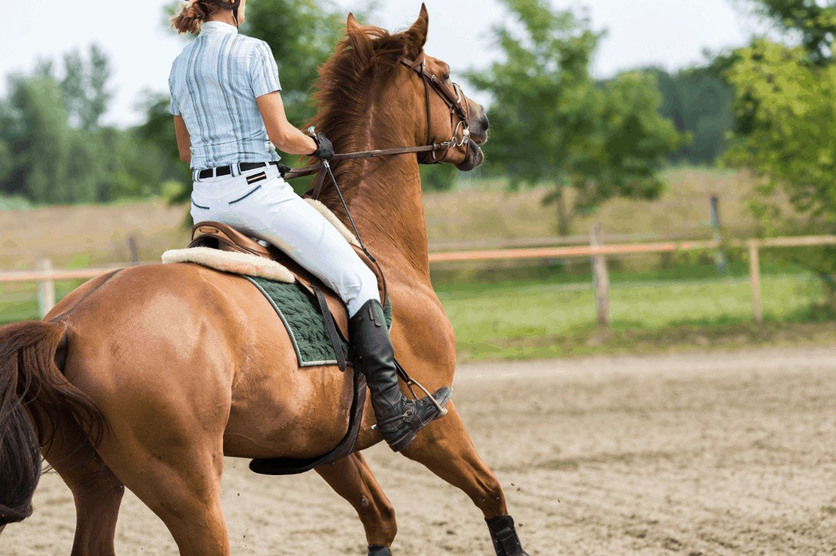 Which is the calmest horse breed for beginners