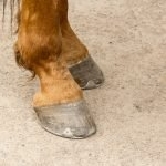 Best Soaking Boots for Horses