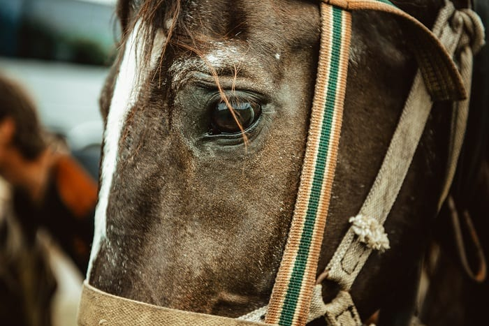 Why Horses Get Lice