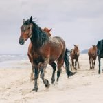 Hot-Blooded Horse Breeds