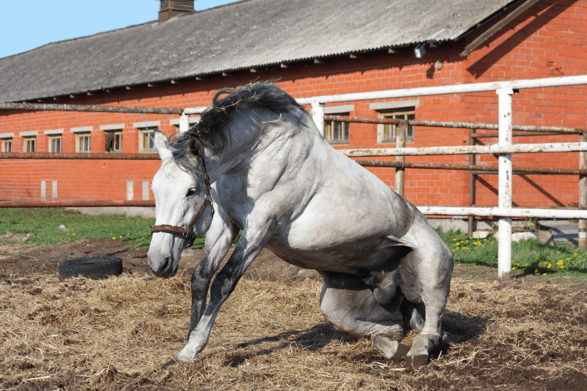 How Do Horses Get Strangles Symptoms and Treatment