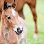 How Much Does a Baby Horse Weigh?
