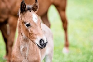 How much do horses weigh? How Much Does a Baby Horse Weigh