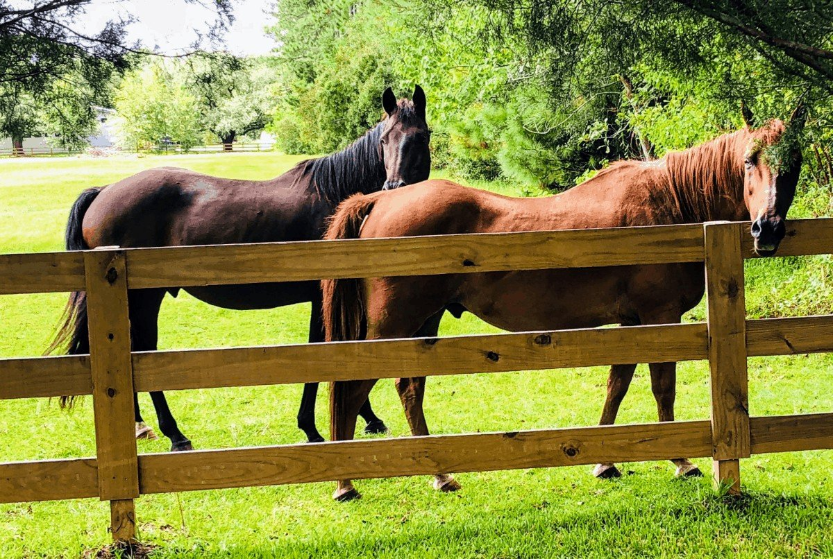 Portable Horse Corrals for Camping