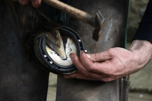 Understanding a Degloved Horse Hoof/Horse Hoof Without Cap