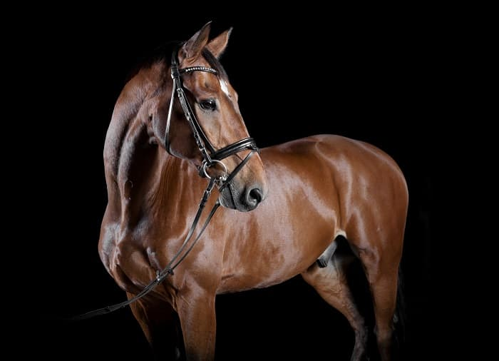 Biological Meaning of Warmblood Horse