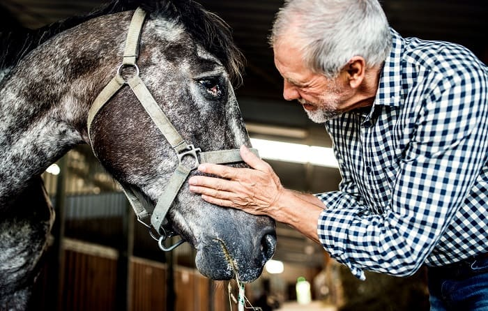 How Old Is Too Old To Ride A Horse: Age a Horse Can Be Ridden