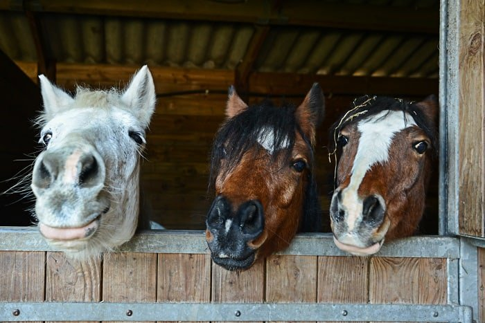 Why Do Horses Snort: Current and Further Research