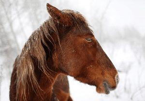 Why Do Horses Snort
