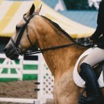 Comparing The Best Horseback Riding Shoes
