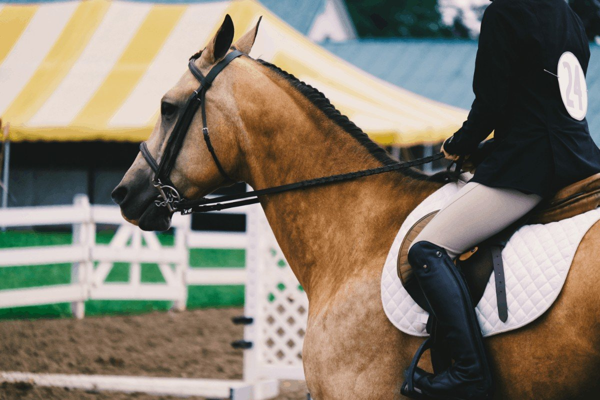 Comparing What Shoes to Wear Horseback Riding