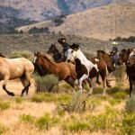 Draft Horses Vs. Riding Horses