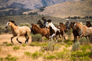 Draft Horses V. Riding Horses