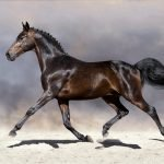 Horse Anatomy: How Many Ribs Does a Horse Have?
