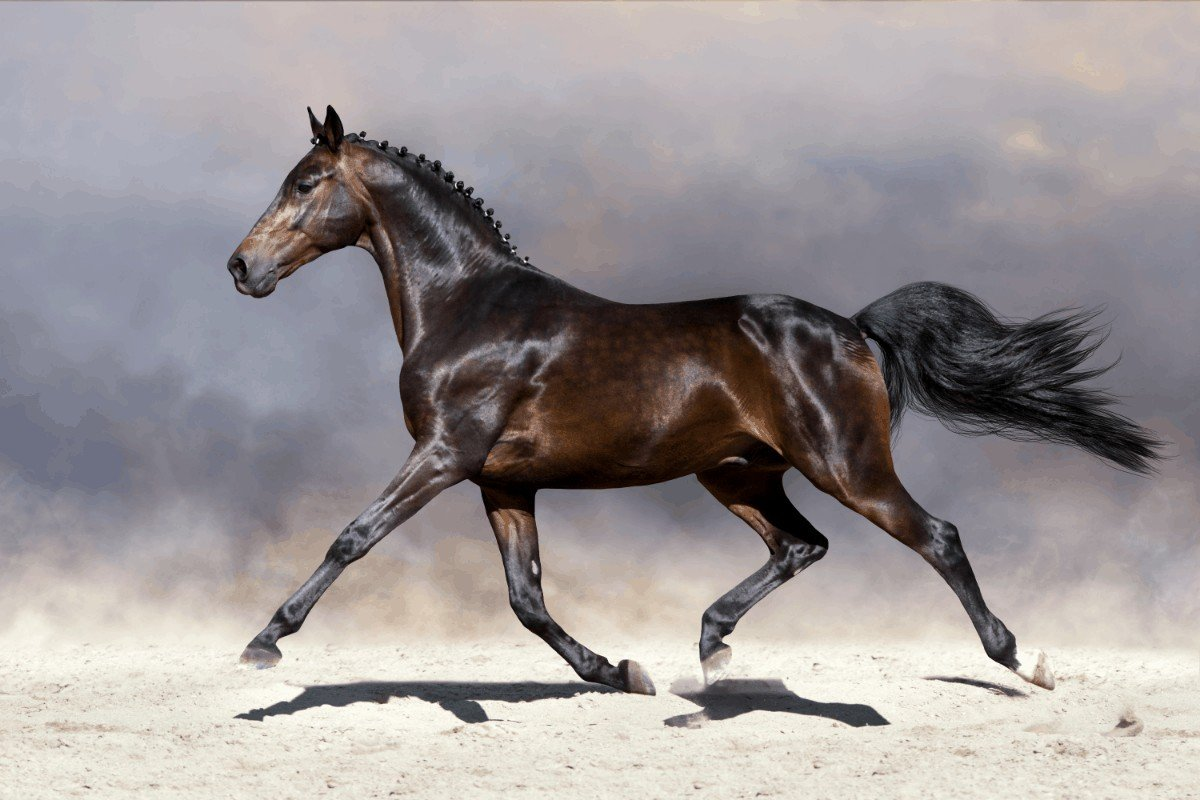 How Many Ribs Does a Horse Have?