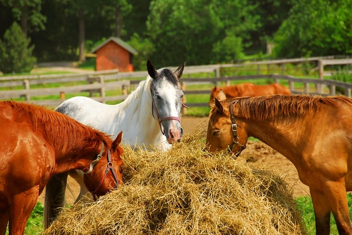 The Real Cost of a Clydesdale Horse
