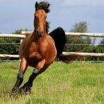 How Much Does a Quarter Horse Weigh?