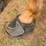Should You Choose Horse Boots Instead of Shoes?