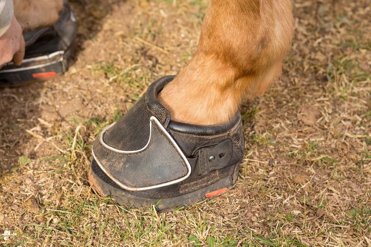 Should You Choose Horse Boots Instead of Shoes