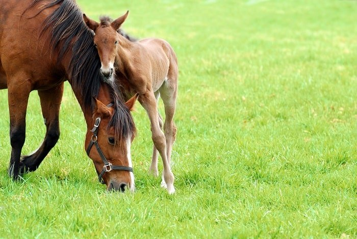 How Long is a Horse Pregnant: The Most Exciting Part